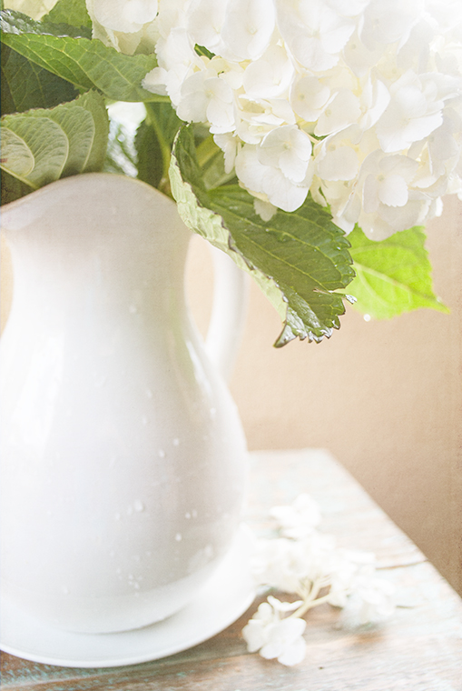 How to Care for Freshly Cut Hydrangeas, Keeping With the Times, Floral Tips and Tricks