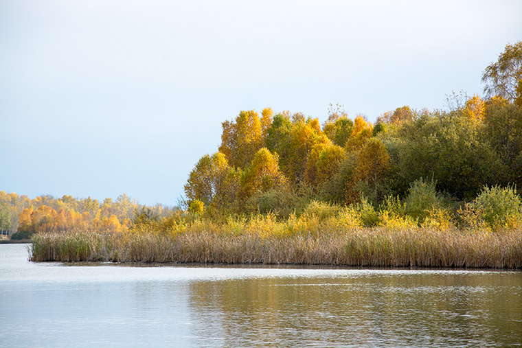 Yellow-Lake-Scene