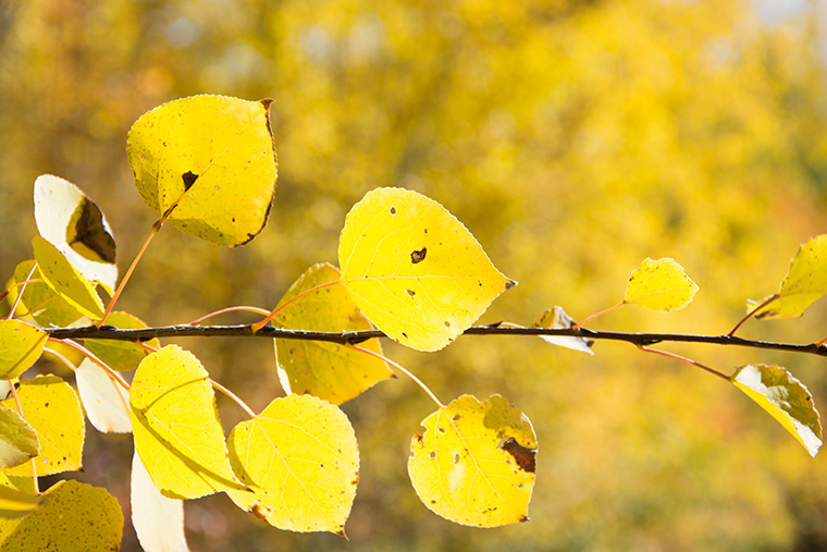 Yellow-Leaves-Nurture