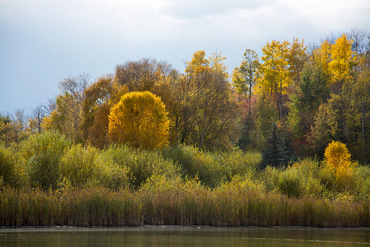 Yellow-Trees-Lake