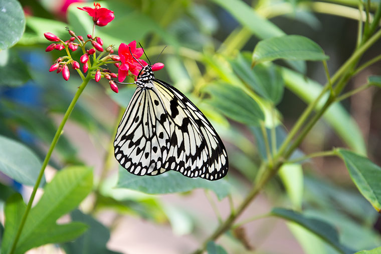 Butterfly Wonderland, AZ