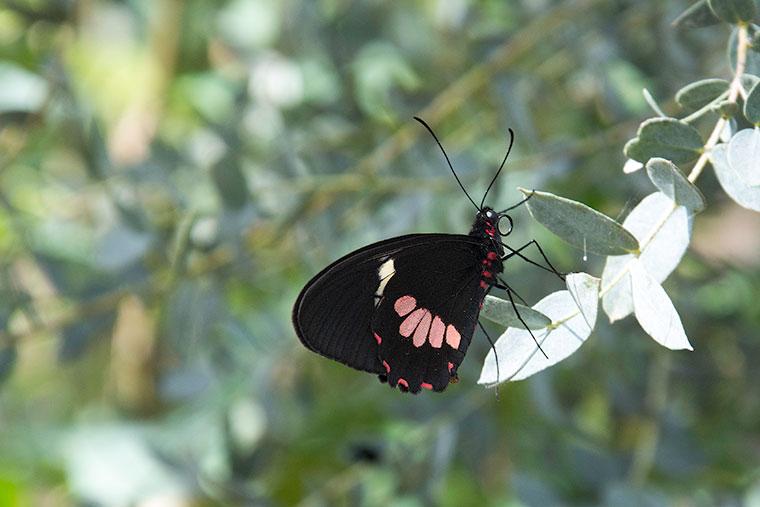 butterfly-copy