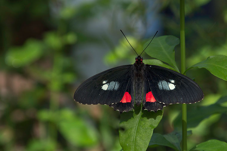 butterfly1-copy