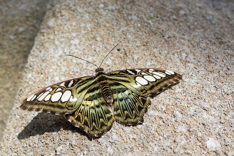 butterfly10-copy