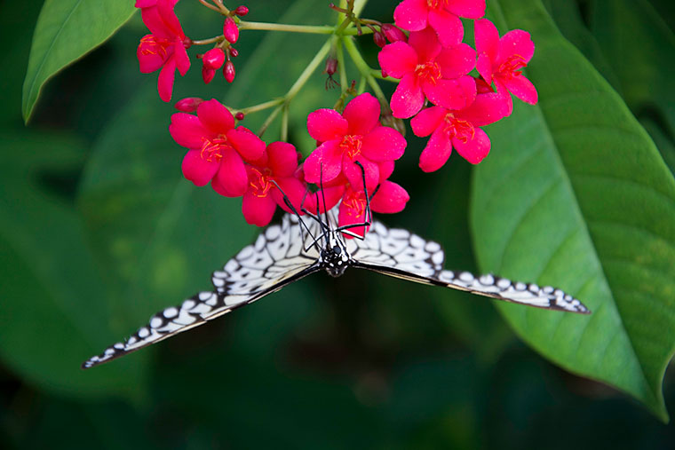 butterfly11-copy