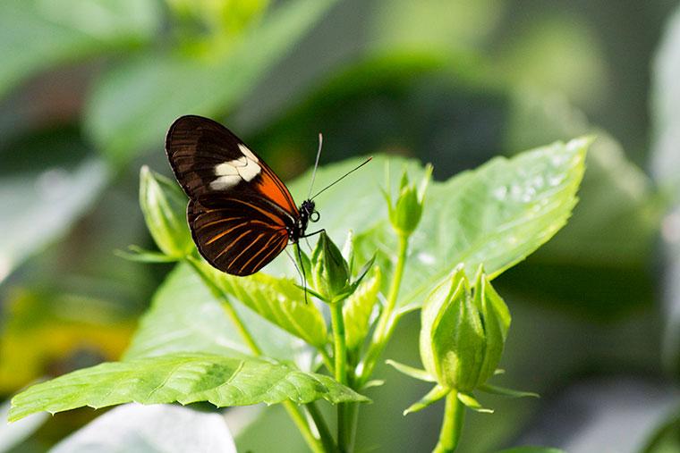 butterfly12-copy