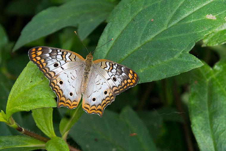 butterfly2-copy