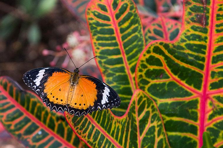 butterfly3-copy