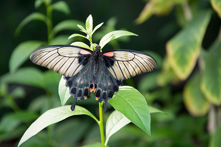butterfly4-copy