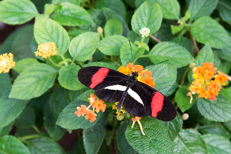 butterfly7-copy