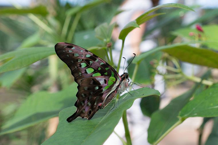 butterfly8-copy