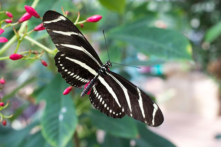 butterfly9-copy