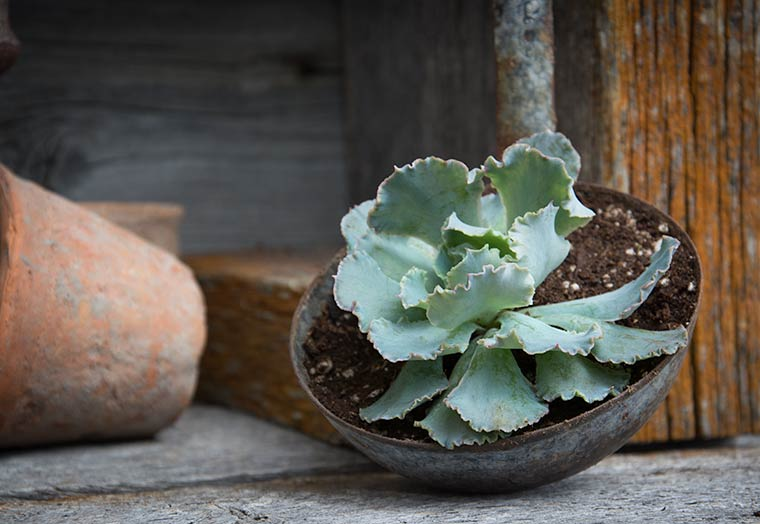 ladle succulent pot, keeping with the times