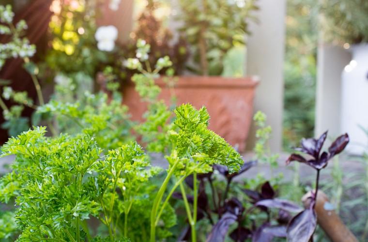 Gardening on the deck