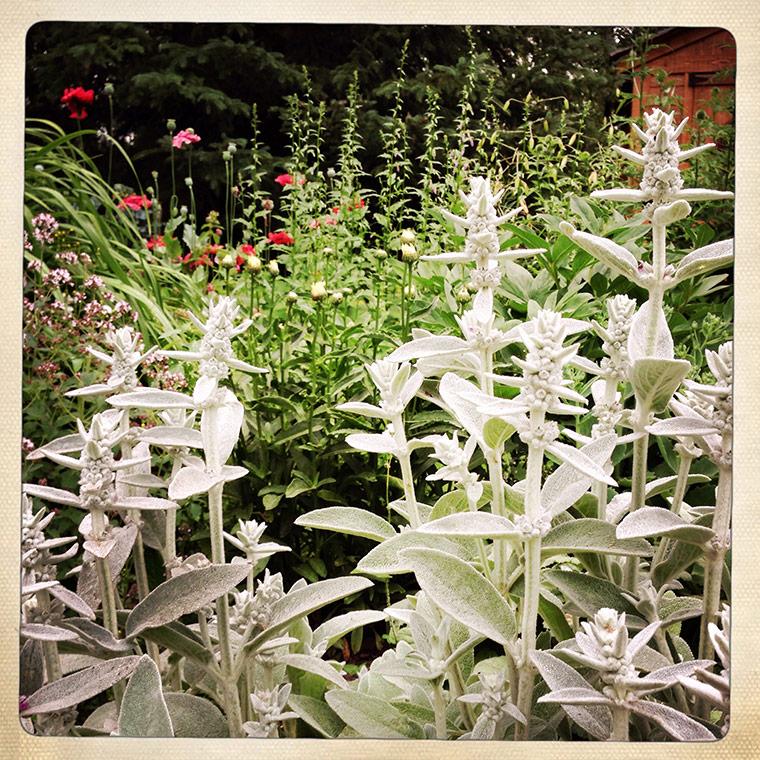 garden1-copy
