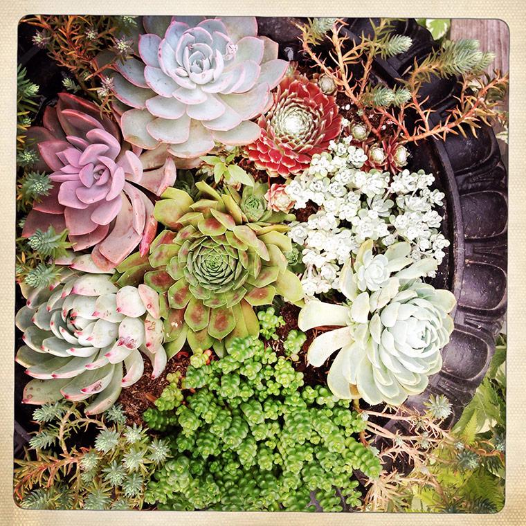 succulent3-copy