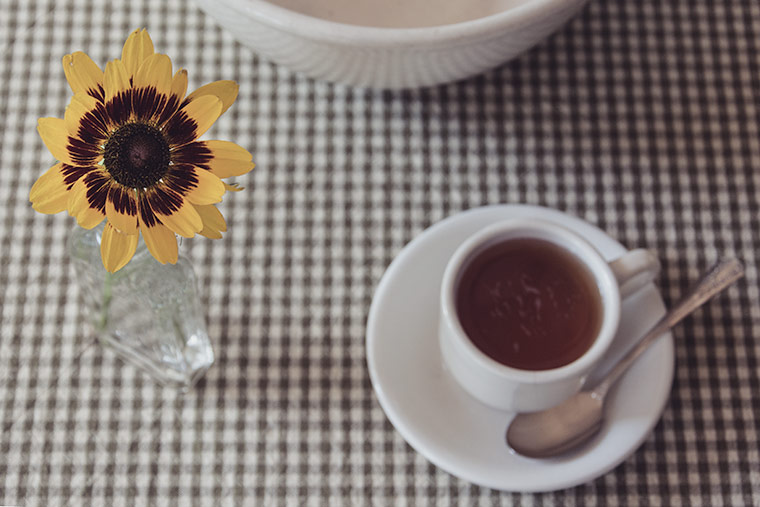 gazania and tea