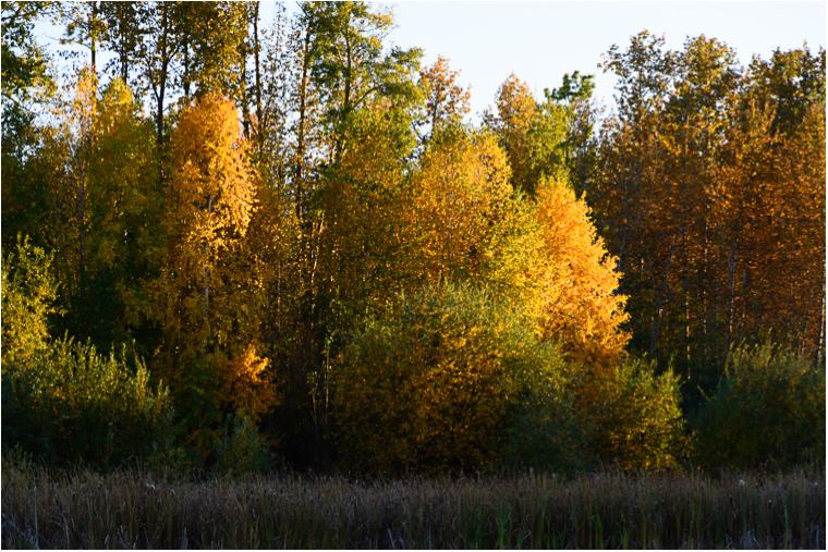 Autumn Reflections_11