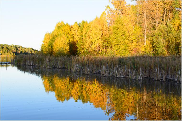 Autumn Reflections_12