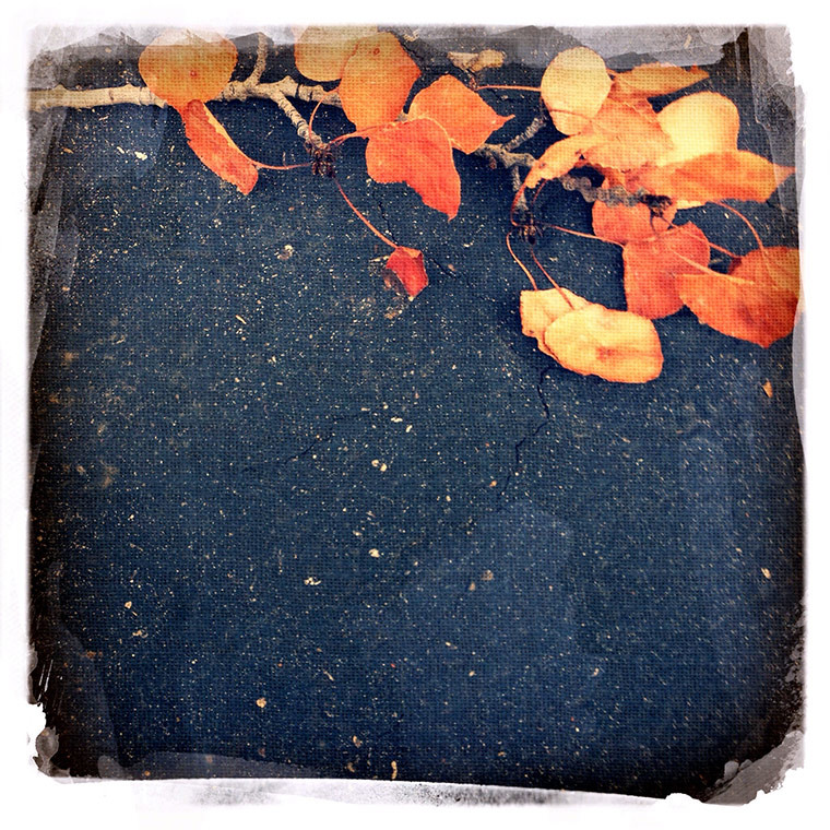 autumn-leaves-copy
