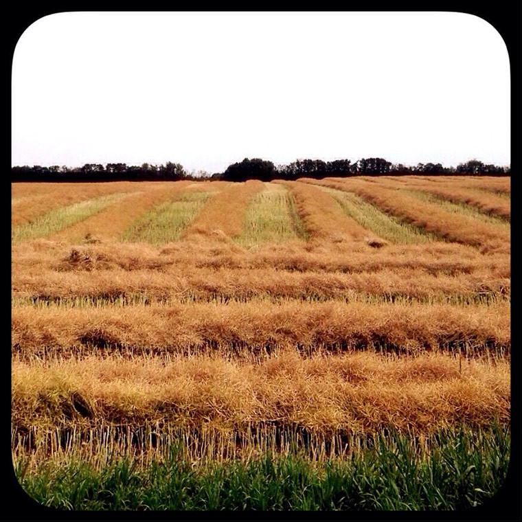 harvest-copy