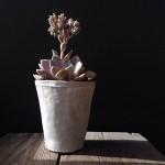 succulent pot, phone photography