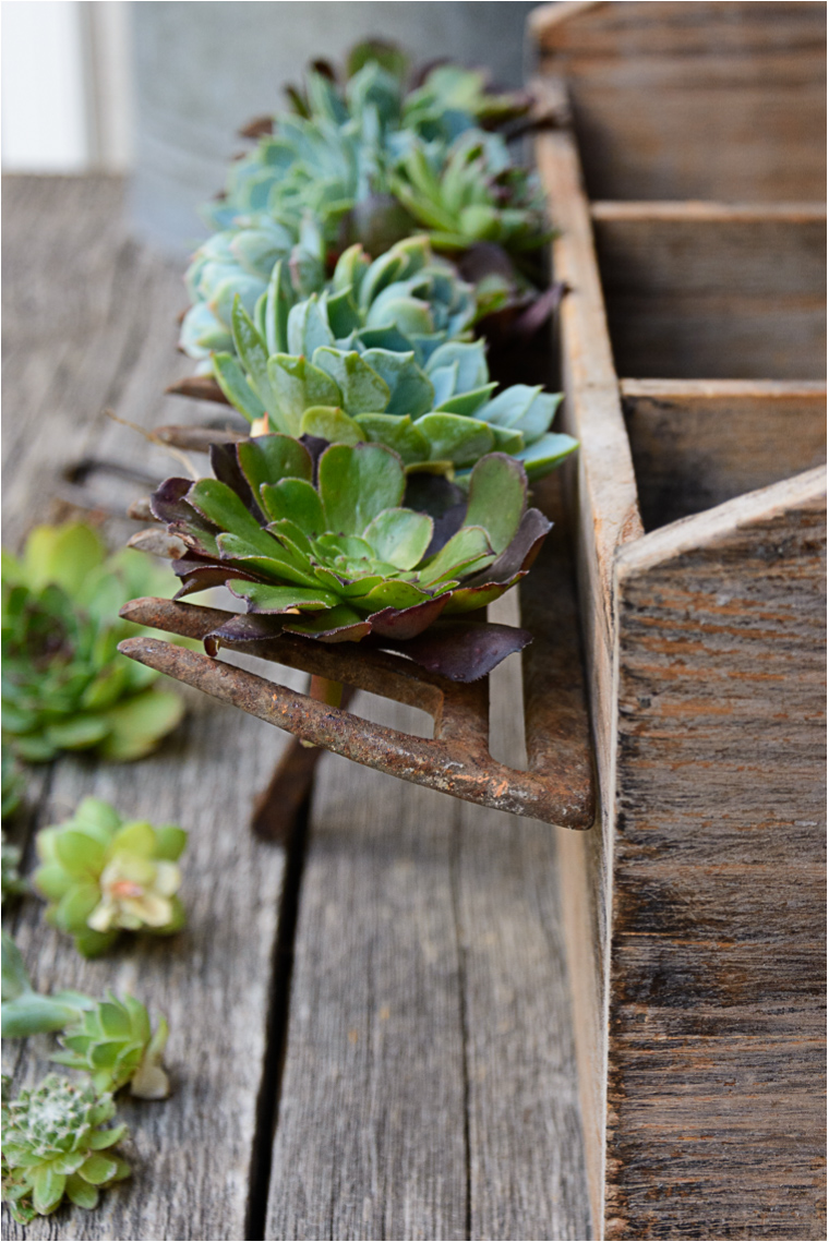 Succulent propagation is so easy to do! Snip off a few shoots and sprouts, let the ends dry for a couple days, then place them on top of some damp soil.