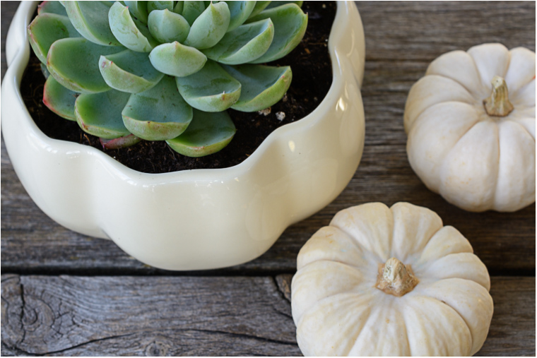 Pumpkin Plant Pot Display Keeping With The Times