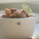 Winter berries and pine cones, Texture Tuesday