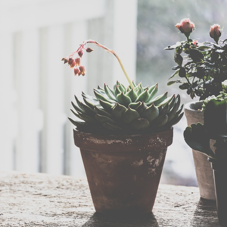 Sunday Sundries, succulent, Keeping With the Times