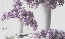 Lilac Party