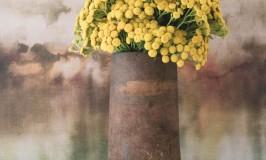 5 Photography Background Ideas