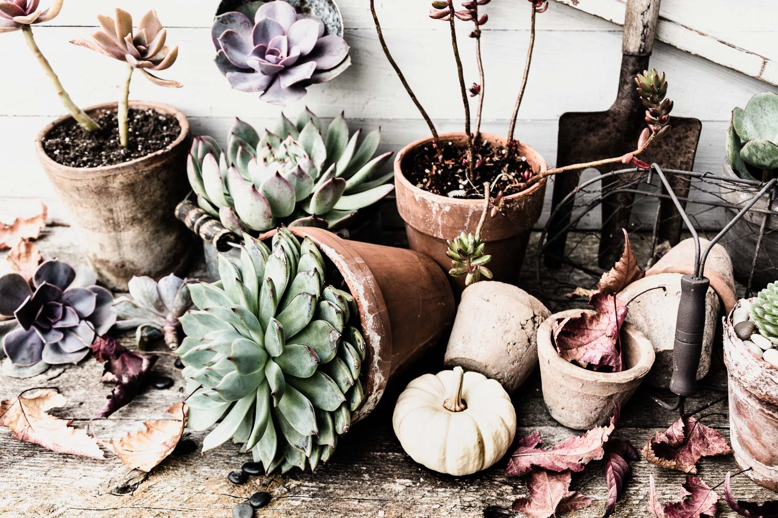 Succulent Parade, Barb Brookbank, Keeping With the Times