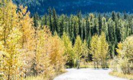 David Thompson Highway, Alberta Canada