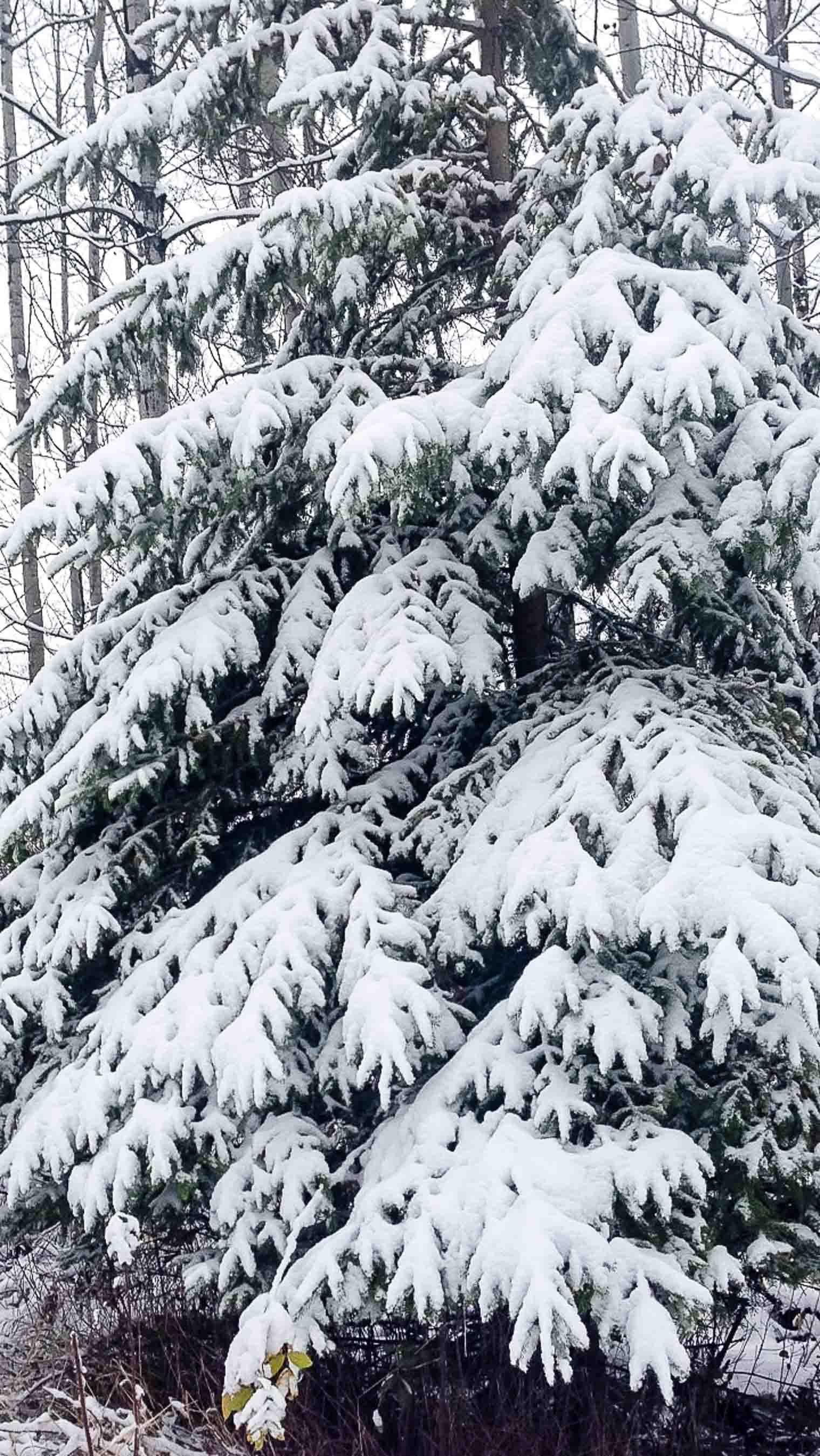 snowy-october