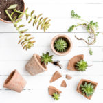 Succulent Love, Keeping With the Times, How to Grow Succulents