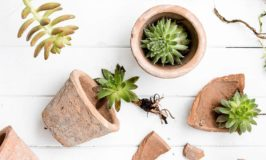 Tips for Overwintering Succulents Indoors