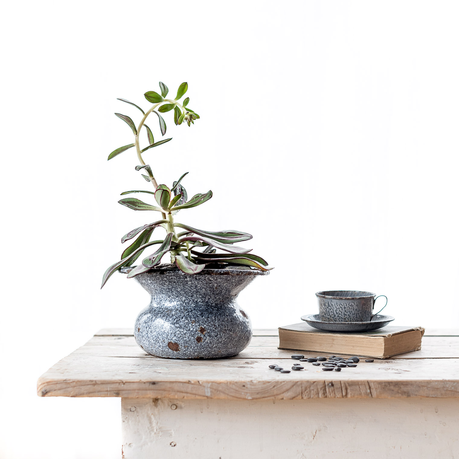 Tips for Overwintering Succulents Indoors, Keeping With the Times