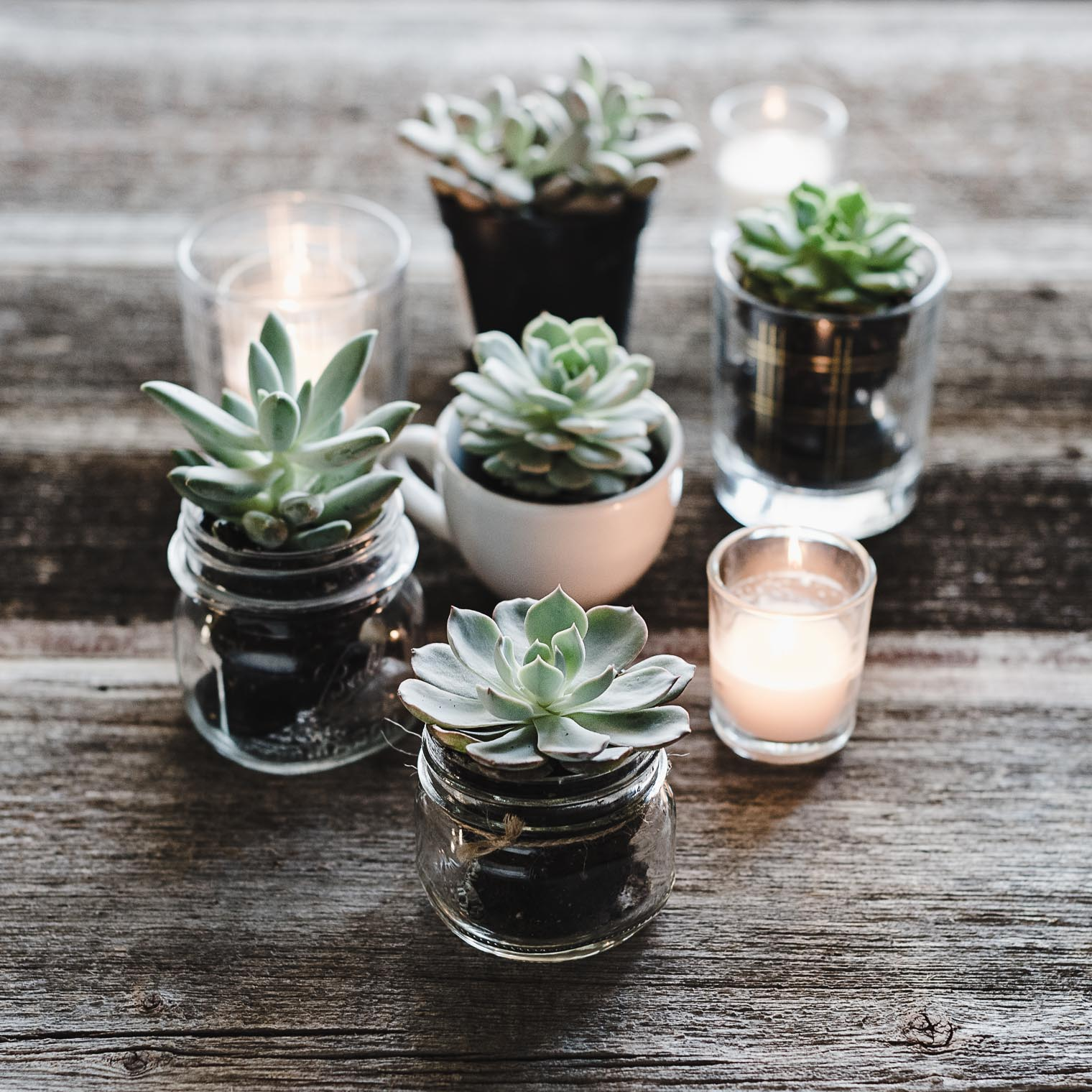 succulent-tea-lights-3079