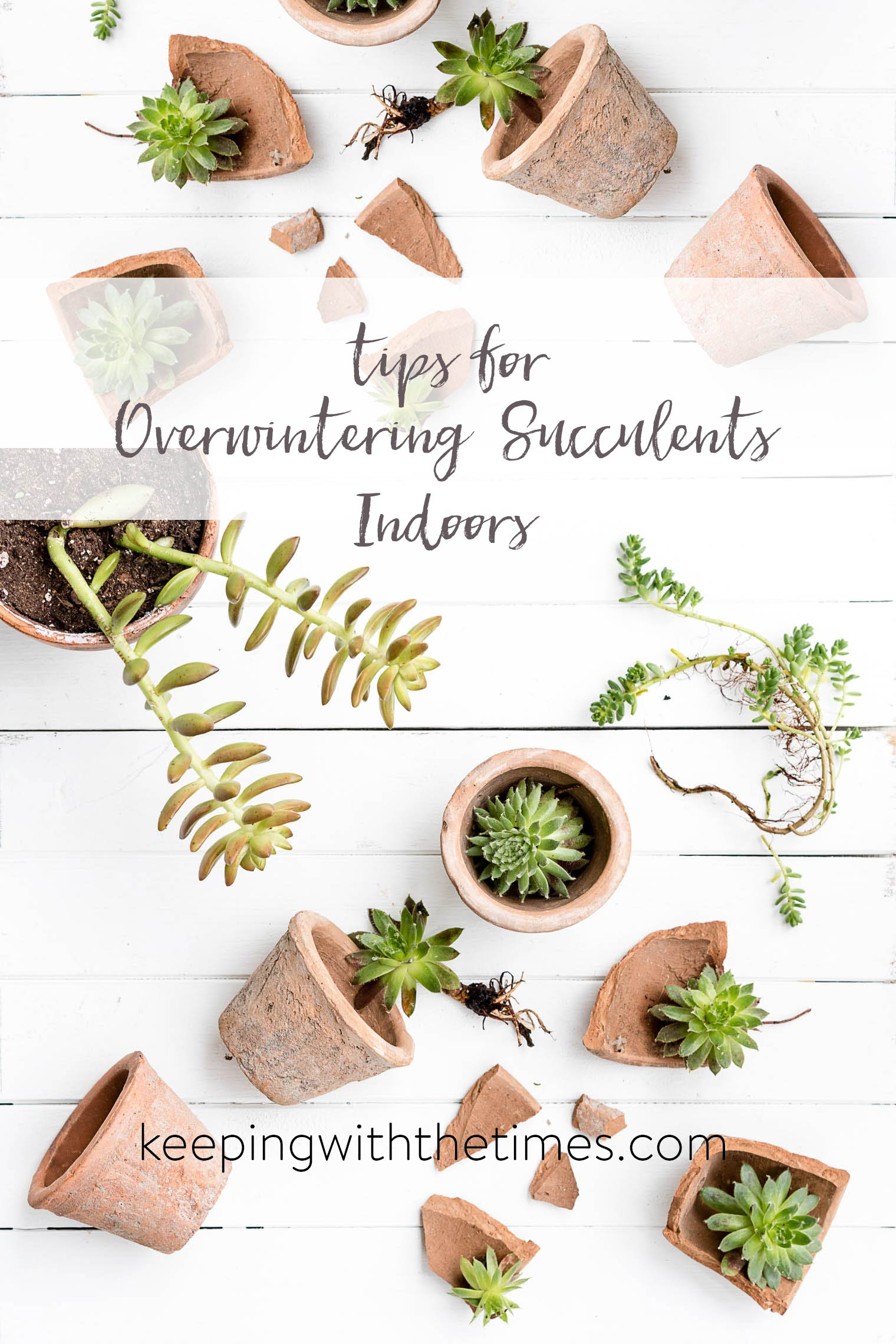 Overwintering Succulents Indoors, Keeping With the Times