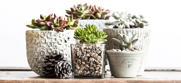 5 Great Ideas for Succulent Containers