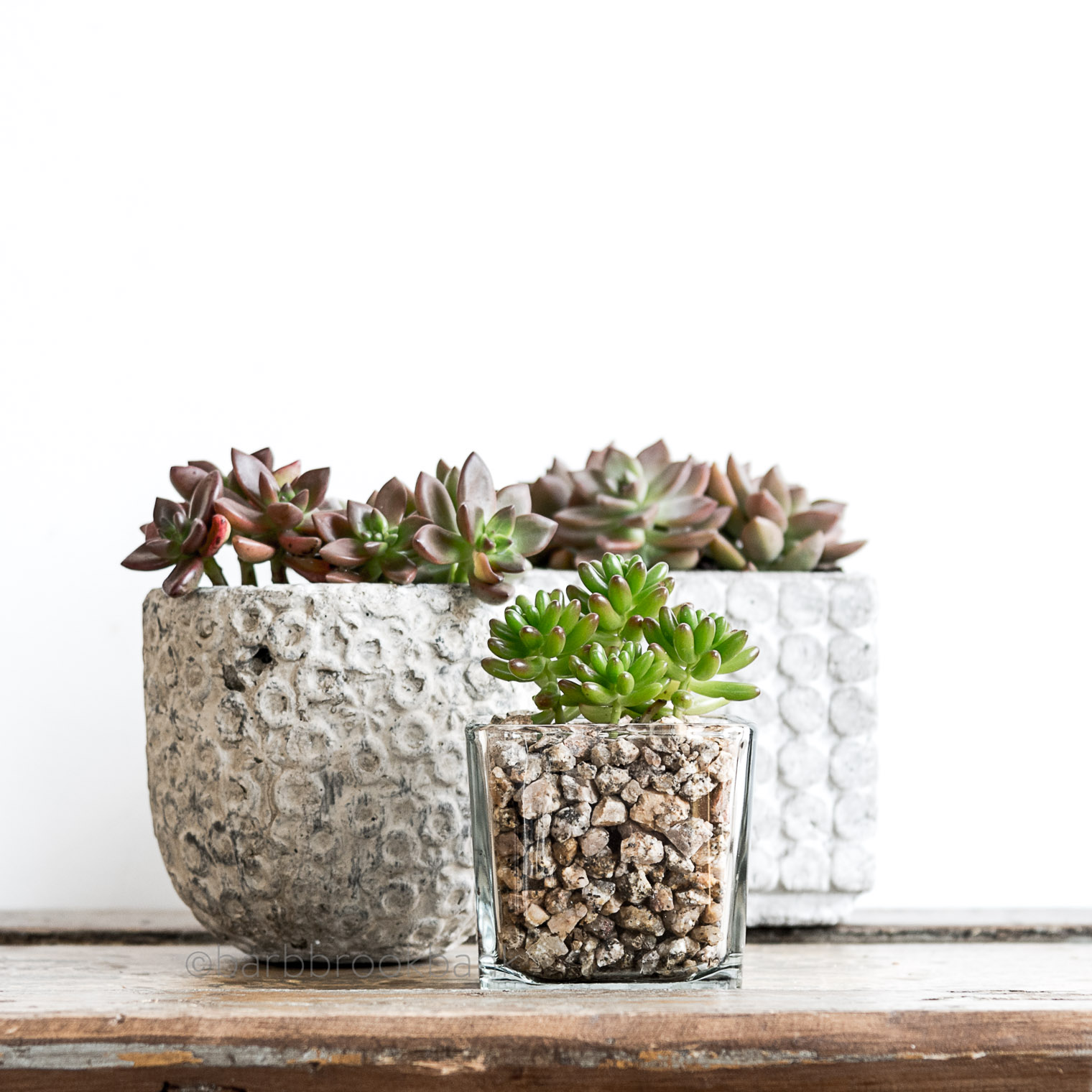 5 Great Ideas for Succulent Containers, Keeping With the Times