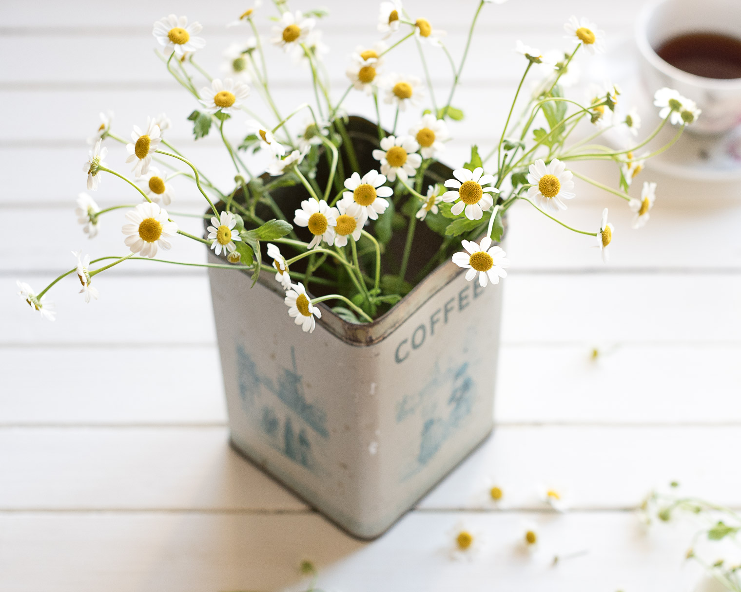 Five Things Friday, Keeping With the Times, Chamomile, Herbs