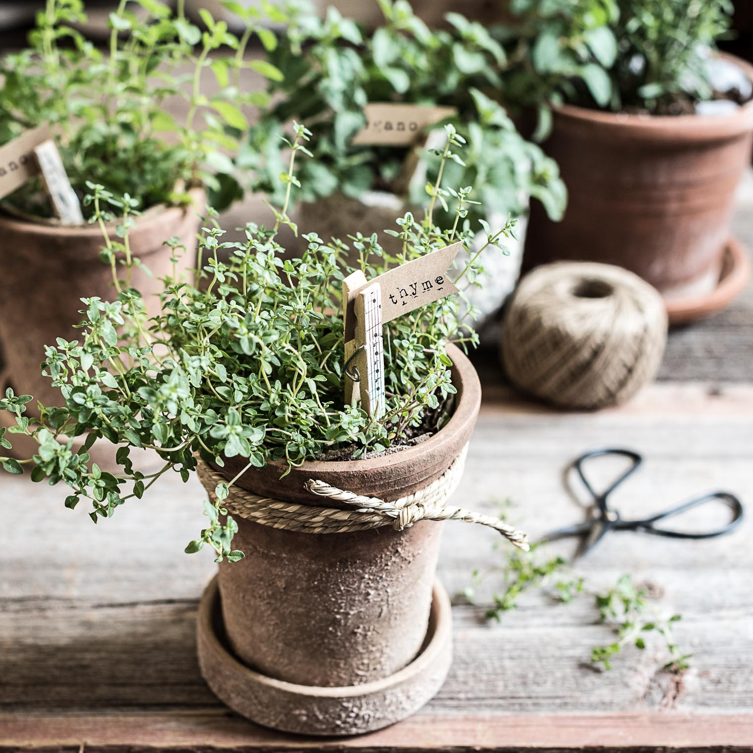 Thyme, Easy DIY Plant Markers, Plant markers for pots of herbs