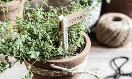 DIY Plant Markers for Herb Pots