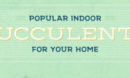 Popular Succulents: Guest Post by FTD