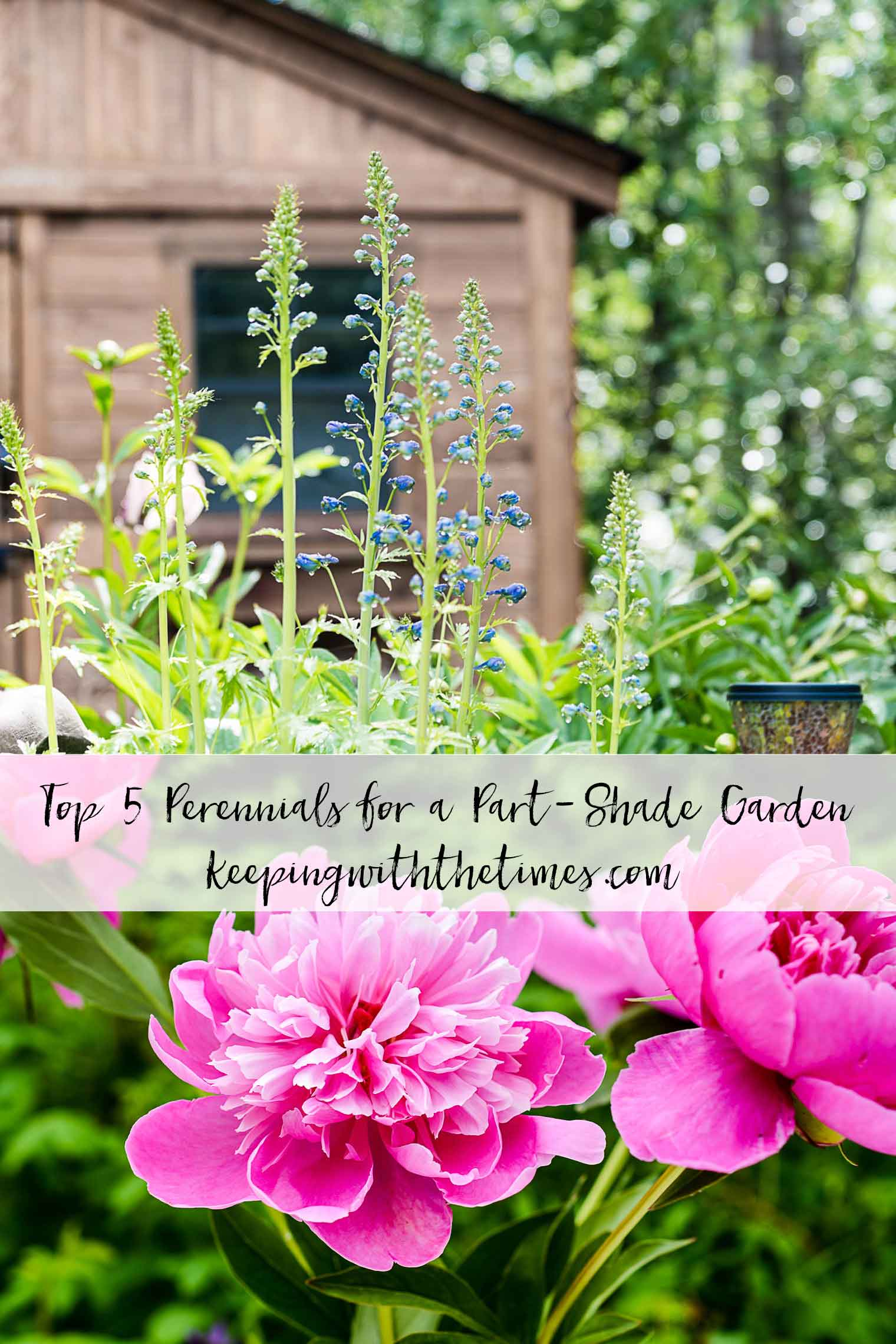 my top 5 perennials for partial shade gardening - keeping with the times